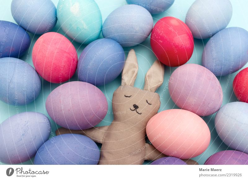 Tired Easter bunny with many colorful eggs Egg Joy Hare & Rabbit & Bunny Work and employment Eating Feasts & Celebrations Sleep Exceptional Funny Cute Blue