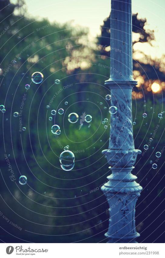 Nature Green Tree Plant Sun Spring Dream Park Flying Happiness Bushes Round Column Fragrance Hover Soap bubble