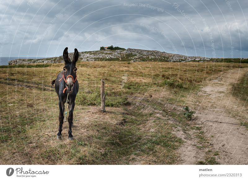 The Guardian Landscape Clouds Horizon Summer Bad weather Grass Coast Animal Pet 1 Scream Blue Brown Gray Green Donkey Colour photo Subdued colour Exterior shot