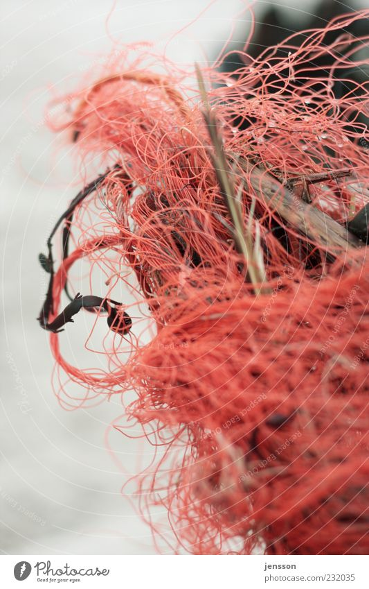 Nature Red Environment Wood Dirty Arrangement Plastic Trash String Chaos Muddled Knot Remainder Environmental pollution