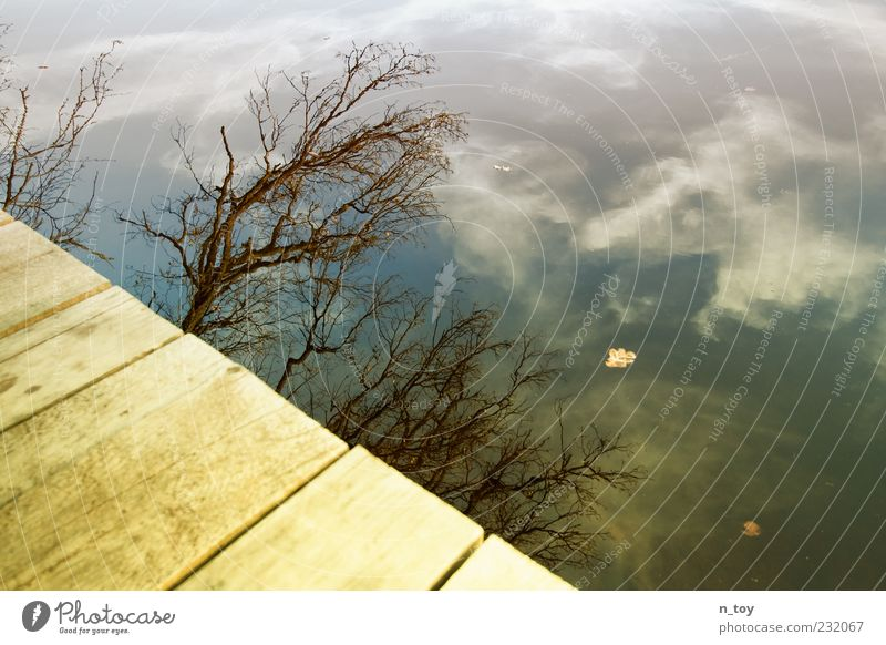 Sky Water Tree Clouds Calm Relaxation Lake Branch Lakeside Footbridge Wooden board Surface of water Wood grain Twigs and branches Leafless Clouds in the sky
