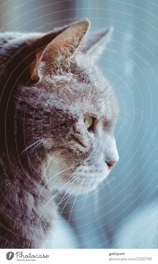 it will be autumn Animal Pet Cat 1 Beautiful Warm-heartedness Longing Wanderlust Loneliness Exhaustion Love of animals Domestic cat Window View from a window