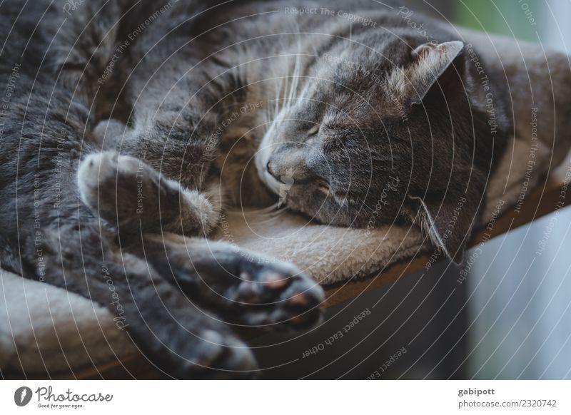Helau Harmonious Well-being Contentment Senses Relaxation Calm Meditation Animal Pet Cat 1 To enjoy Sleep Joie de vivre (Vitality) Nostalgia Wellness