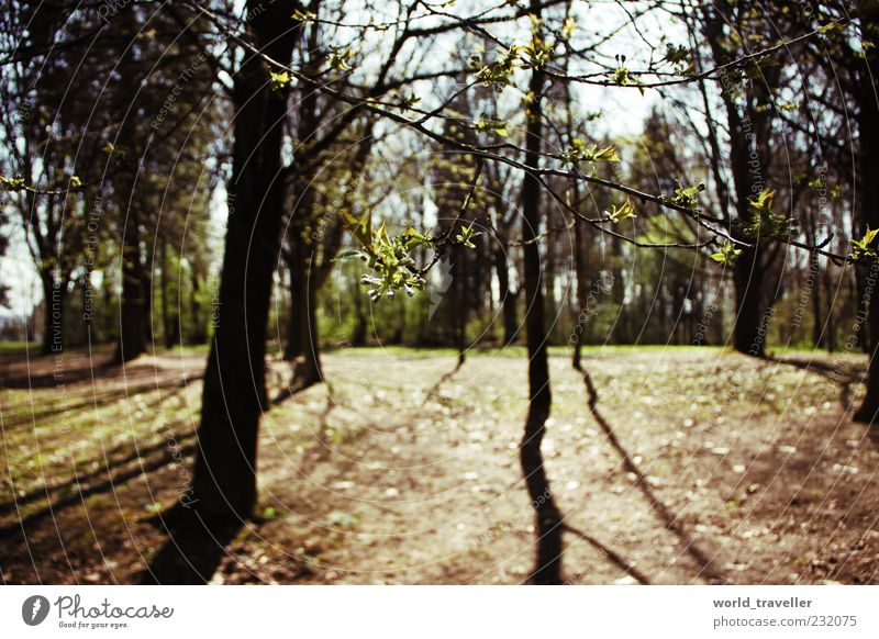 spring fever. Nature Old Green Beautiful Tree Sun Leaf Forest Environment Life Spring Think Wild Natural Growth Future