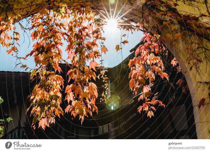 Sky Nature Blue Plant Red Autumn Environment Contentment Gold Air Joie de vivre (Vitality) Beautiful weather Vine Wine Positive Ease