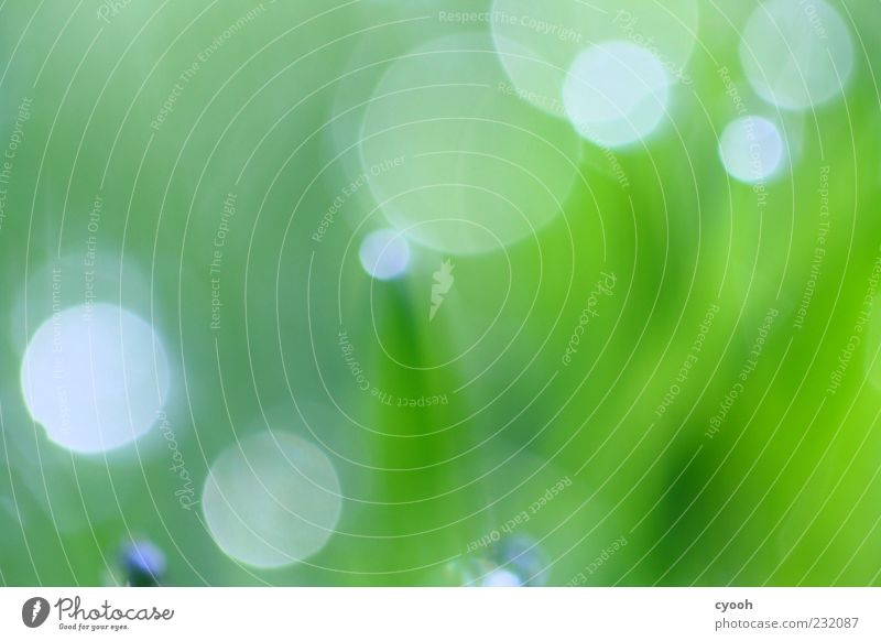 points Nature Plant Grass Simple Fresh Wet Juicy Green Blur Phenomenon Point Visual spectacle Drops of water Meadow Colour photo Exterior shot Close-up Abstract