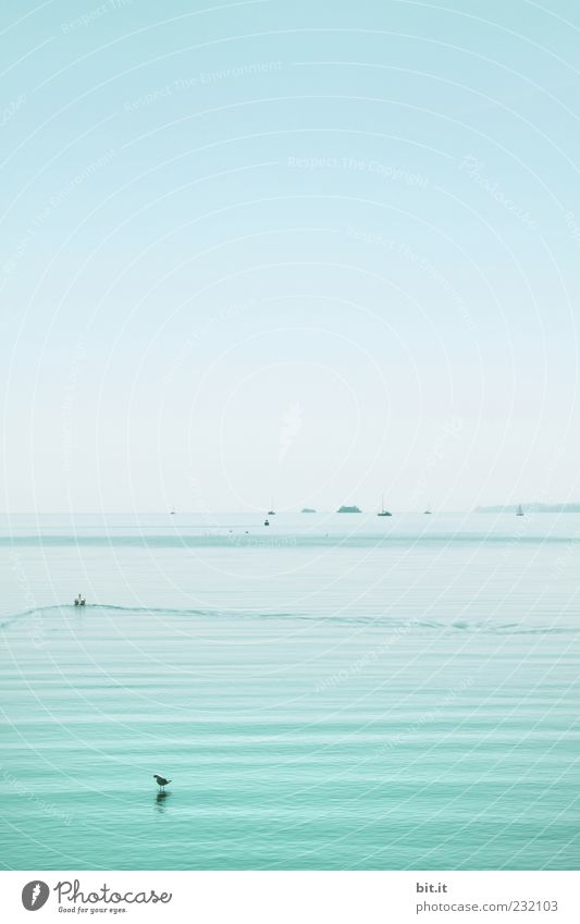 Sky Nature Blue Water Summer Environment Landscape Lake Watercraft Wet Elements Beautiful weather Navigation Cloudless sky Light blue Lake Constance