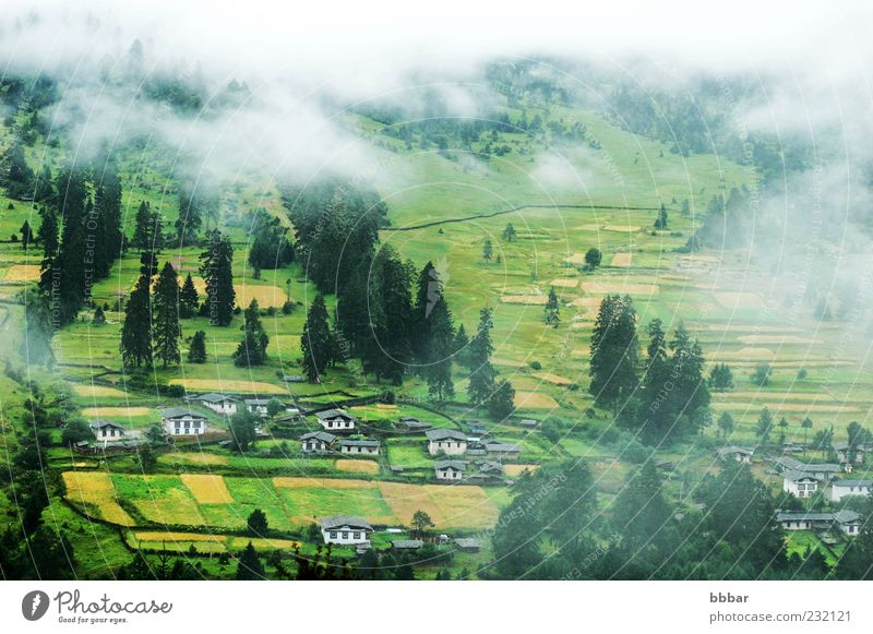 Landscape of misty fields and woods Nature Tree Summer Vacation & Travel House (Residential Structure) Clouds Yellow Forest Autumn Grass Mountain Fog Frost