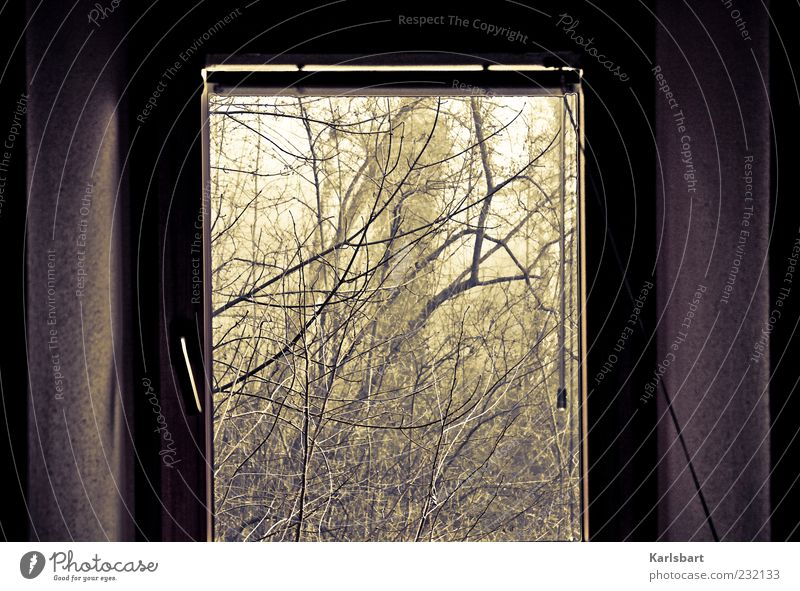 window. to the forest. Living or residing Flat (apartment) Environment Nature Landscape Summer Autumn Plant Bushes Forest Wall (barrier) Wall (building) Window