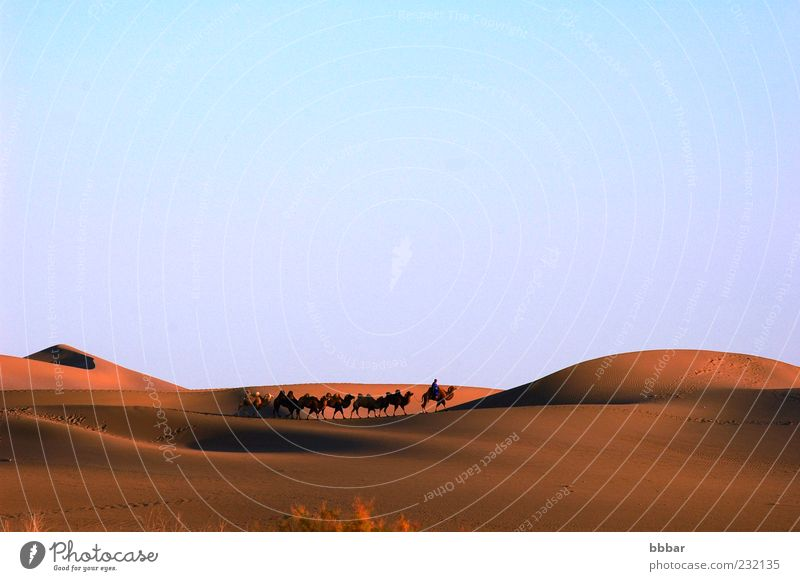 Landscape of desert Vacation & Travel Adventure Freedom Sightseeing Safari Summer Man Adults 1 Human being Environment Nature Animal Sand Sky Cloudless sky