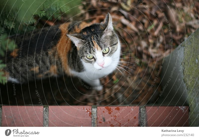 Cat White Green Leaf Animal Environment Life Small Garden Wall (barrier) Brown Fear Natural Dangerous Authentic Cute