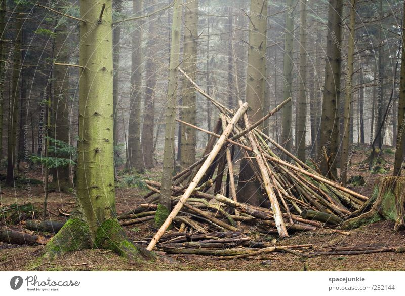 Nature Green Tree Forest Landscape Wood Creepy Discover Hut Tree trunk Moss Build Stack Woodground House (Residential Structure) Tee Pee