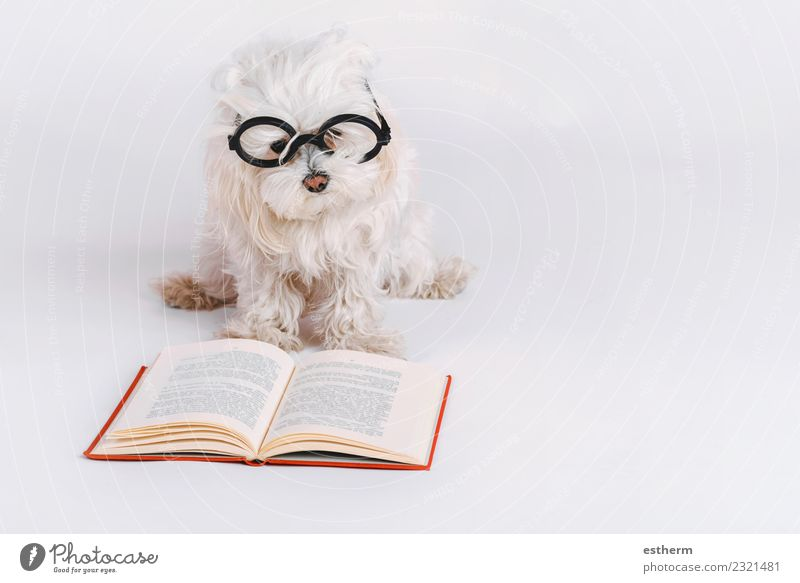 funny dog with glasses and a book on white background Book Accessory Eyeglasses Animal Pet Dog 1 Study Reading Lie Friendliness Happiness Cuddly Funny Curiosity