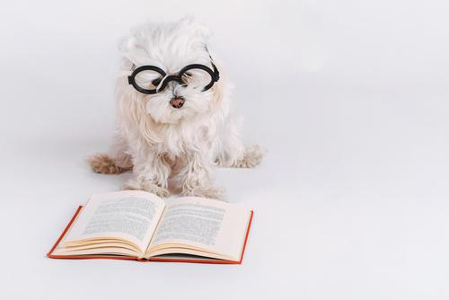 funny dog with glasses and a book on white background Dog Animal Funny Emotions Lie Creativity Happiness Study Book Idea Friendliness Eyeglasses Curiosity