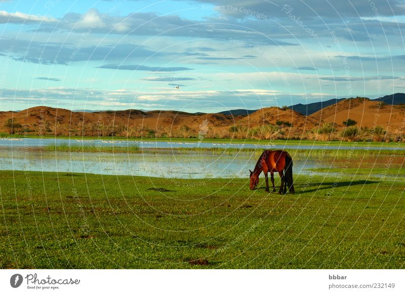Landscape of a single horse on the grasslands Nature Water Sky Green Blue Summer Vacation & Travel Clouds Animal Meadow Grass Mountain Lake Brown Environment