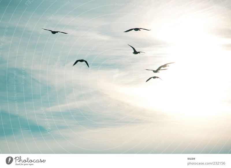Sky Nature Sun Animal Environment Movement Freedom Bright Moody Flying Bird Air Wild Wild animal Future Group of animals
