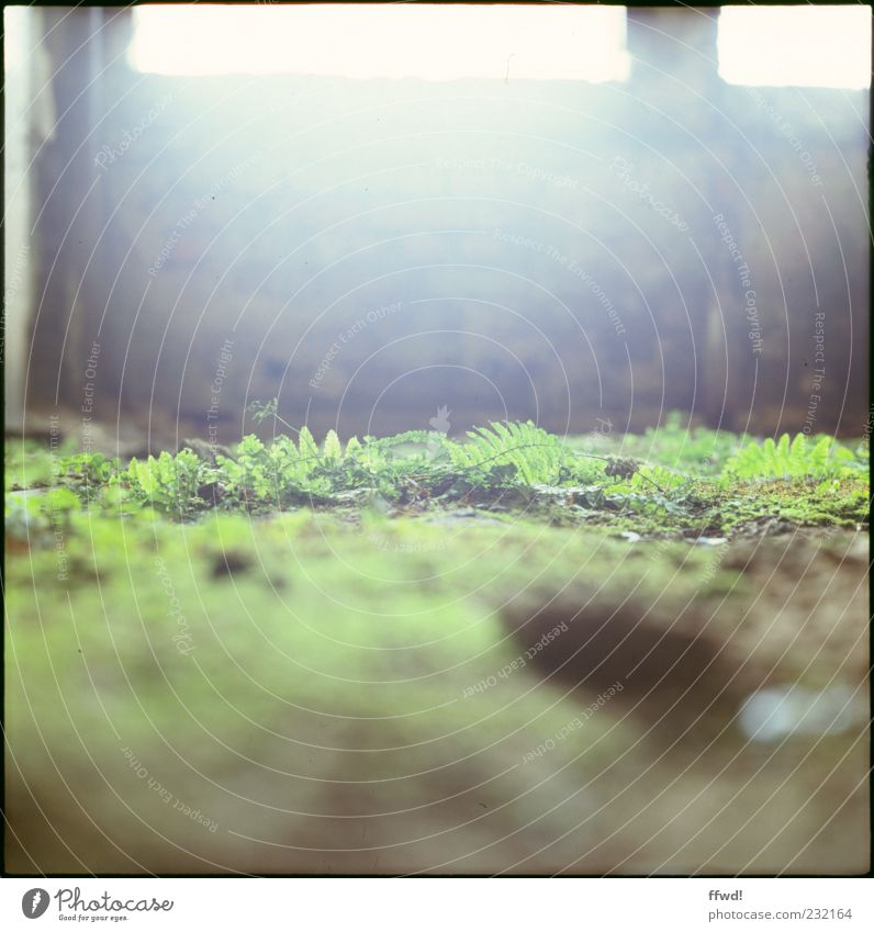 [FFM2011.1] Soft green Plant Earth Sunlight Moss Fern Deserted Ruin Manmade structures Building Wall (barrier) Wall (building) Window Ground Old Moody Calm