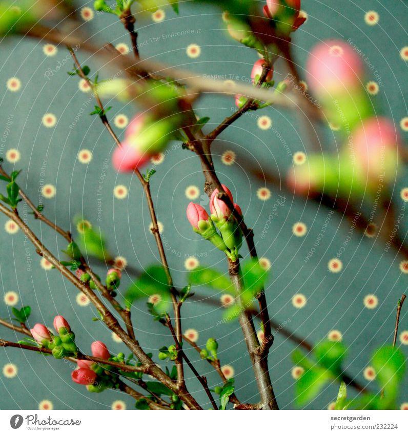 Green Plant Leaf Colour Blossom Spring Brown Pink Fresh Bushes Retro Kitsch Wallpaper Fragrance Muddled Fruit