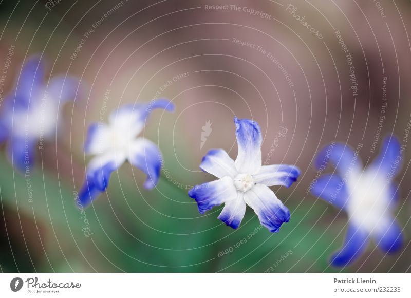 Nature Blue Green Beautiful Plant Flower Environment Blossom Spring Natural Delicate Botany Blossom leave Vignetting Intensive Gaudy