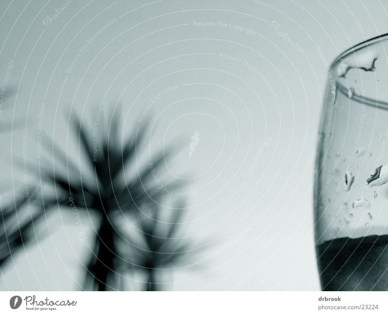 Sky Summer Beach Vacation & Travel Relaxation Glass Drops of water Palm tree Photographic technology