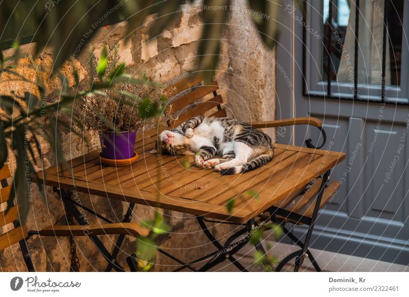 Sleeping cat Relaxation Vacation & Travel Freedom Summer Chair Table Environment Nature Beautiful weather Warmth Plant Tree Flower Small Town Old town Deserted