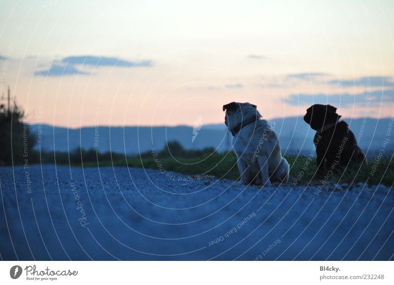 How much further? Nature Landscape Earth Sky Clouds Horizon Sunrise Sunset Tree Grass Deserted Animal Pet Dog 2 Pair of animals Stone Sand Together Emotions