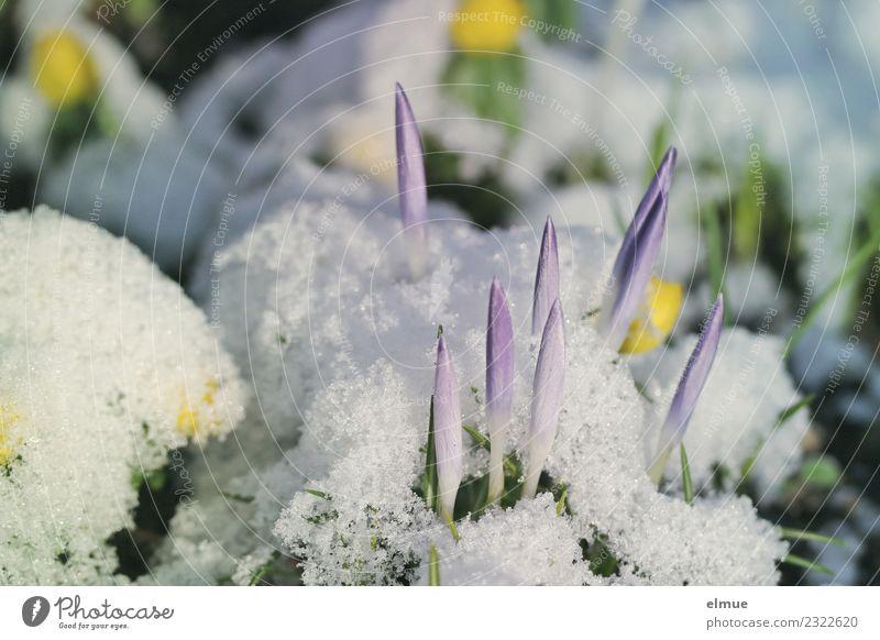 Nature Plant White Blossom Spring Emotions Snow Happy Esthetic Beginning Joie de vivre (Vitality) Blossoming Energy Point Romance Curiosity