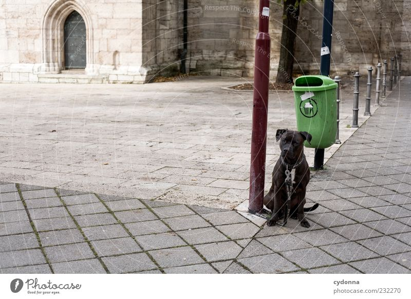 Dog Loneliness Calm Sit Wait Places Safety Longing Street lighting Animal Trash container Obedient Dog lead Looking Light Perspective