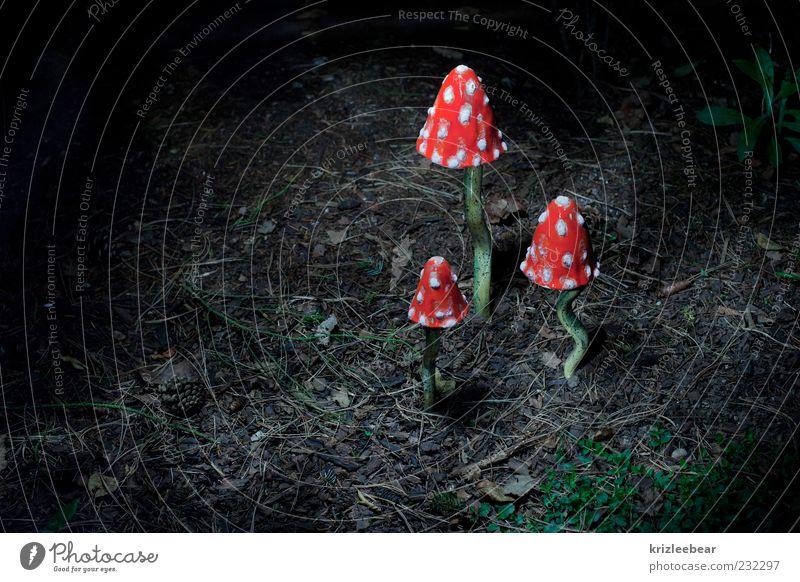king of mushrooms Environment Nature Plant Elements Autumn Wild plant Mushroom Amanita mushroom Glittering Green Red Happy Dangerous Popular belief