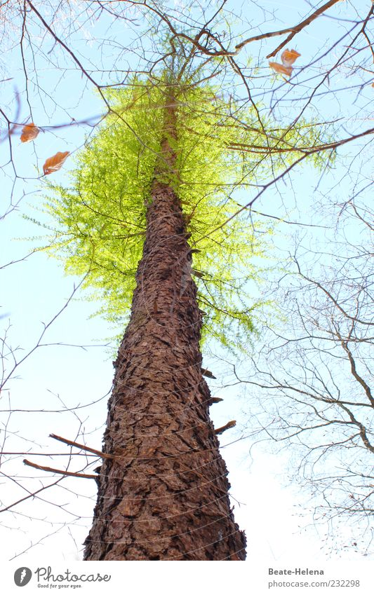 Sky Nature Blue Green Tree Leaf Above Wood Spring Brown Natural Beginning Growth New Beautiful weather Treetop
