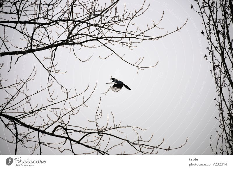 Sky Nature White Tree Plant Animal Clouds Black Environment Landscape Freedom Gray Bird Flying Natural Climate