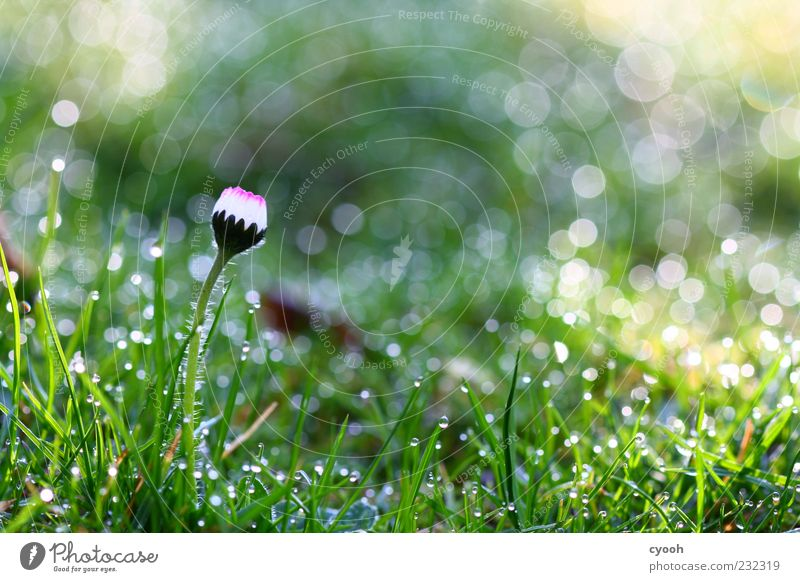 Nature Water White Green Beautiful Plant Flower Meadow Cold Grass Spring Dream Rain Glittering Wet Fresh