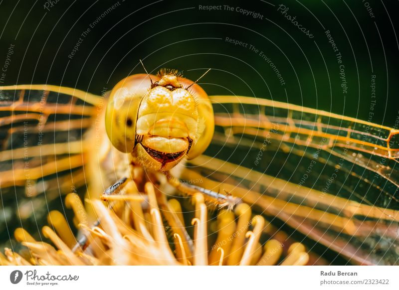 Extreme Macro Photo Of A Dragonfly Environment Nature Animal Summer Wild animal Fly Animal face Wing 1 Discover Uniqueness Small Cute Yellow Orange Adventure
