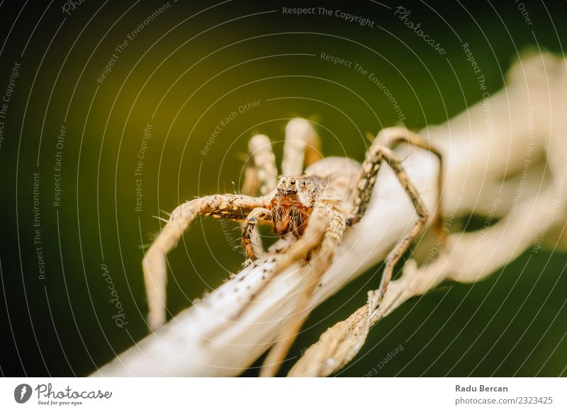Nursery Web Spider Environment Nature Plant Animal Summer Leaf Garden Wild animal Animal face 1 Small Natural Brown Green White Fear Dangerous Threat Whimsical