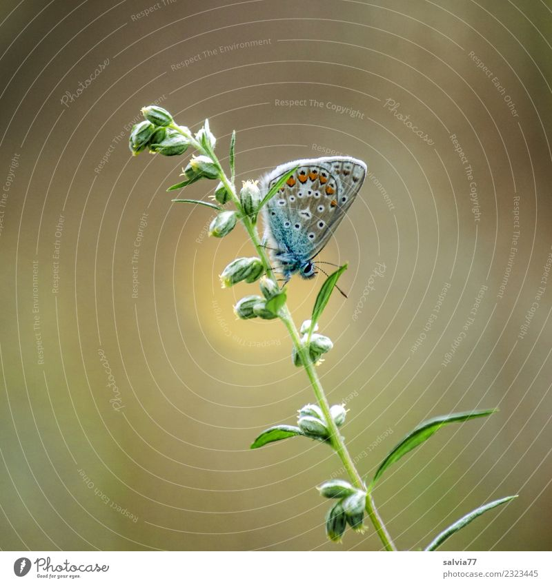 Take a break. Environment Nature Summer Plant Leaf Bud Animal Butterfly Insect Polyommatinae 1 Small Cute Brown Yellow Green Ease Break Calm Colour photo