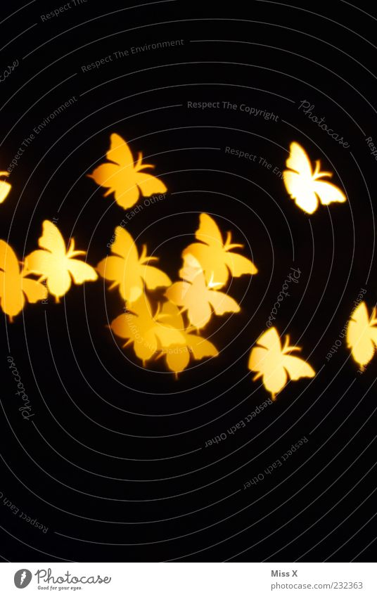 light points Animal Butterfly Wing Flock Flying Yellow Insect Structures and shapes Light (Natural Phenomenon) Black Colour photo Pattern Deserted
