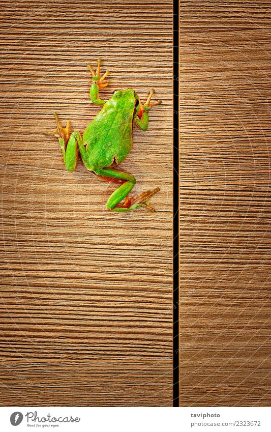 cute green tree frog climbing on wood Nature Colour Green Tree House (Residential Structure) Animal Environment Funny Natural Wood Small Wild Cute Climbing