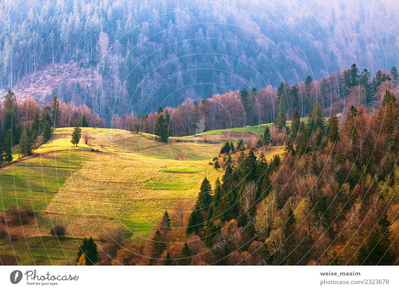 Green hills in mountain valley. Spring landscape. Nature Vacation & Travel Summer Beautiful Landscape Tree Forest Mountain Environment Meadow Natural Grass