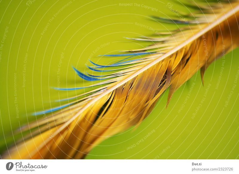 feather Feather Blue Yellow Green Colour Disheveled Things Colour photo Interior shot Studio shot Close-up Detail Structures and shapes Deserted Copy Space left