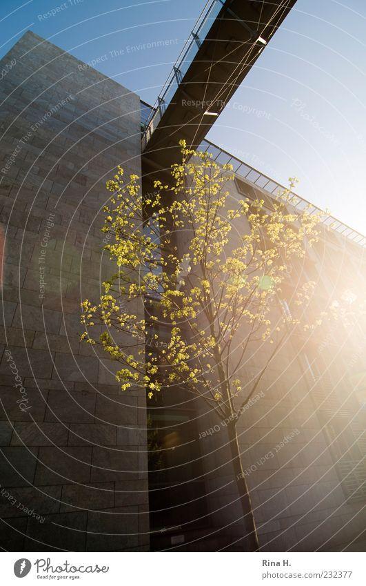 Tree Leaf Yellow Building Spring Facade Beginning Bridge Blossoming Joie de vivre (Vitality) Lens flare Spring fever