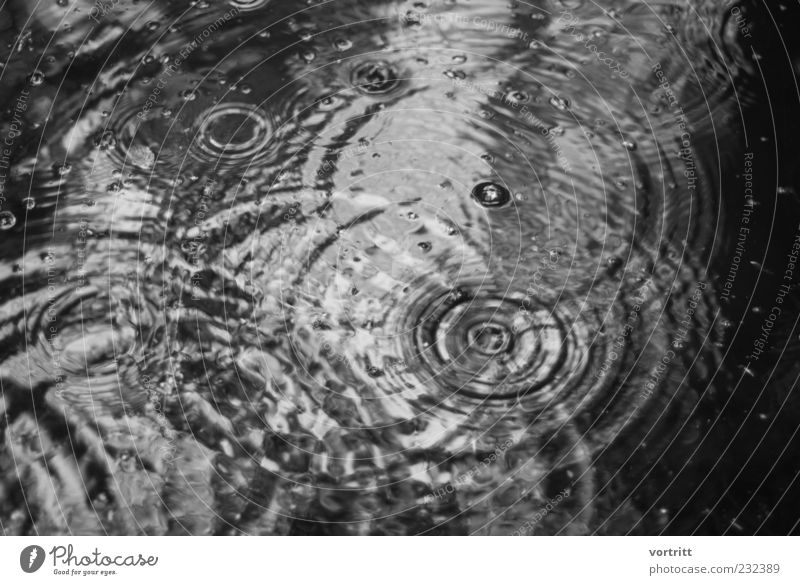 a rainy day Nature Weather Bad weather Rain Pond Lake Water Threat Cold Uniqueness Symmetry Drops of water Circle Reflection Black & white photo Deserted Day