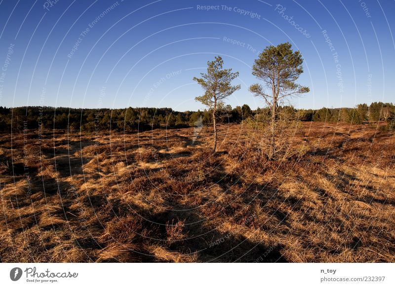 Sky Nature Tree Environment Landscape Grass Bushes Bavaria Cloudless sky Europe Marsh Bog