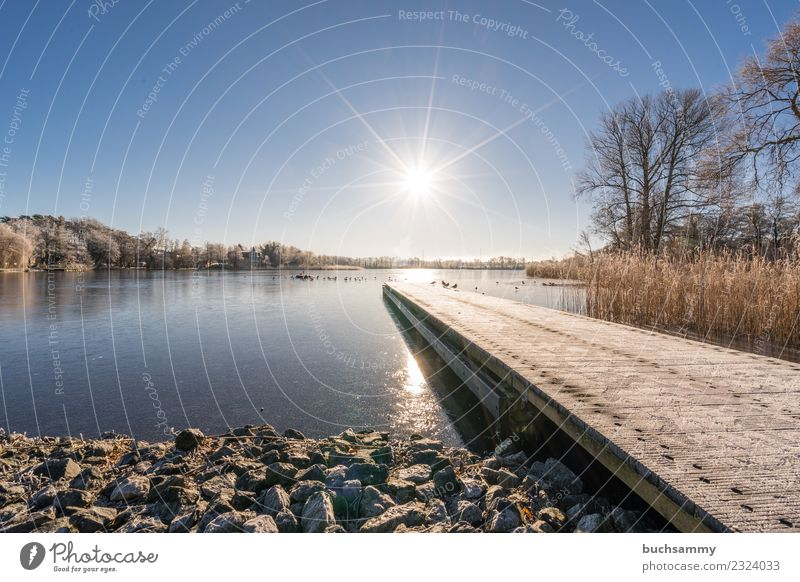 Lake in winter Vacation & Travel Winter Baltic Sea Cold Blue 2018 Bansin Ice Frozen Body of water Hoar frost Common Reed Schloonsee sunshine solar star bank