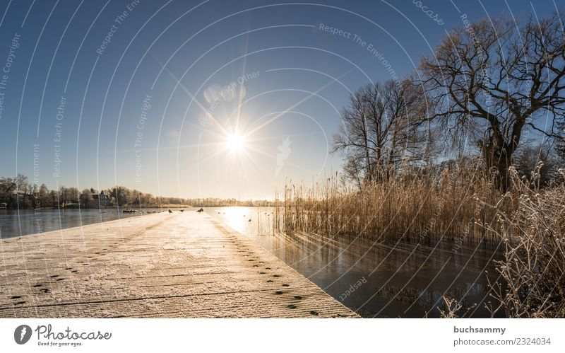 Sunflare over a jetty in the lake Vacation & Travel Winter Baltic Sea Lake Cold Blue 2018 Bansin Ice Frozen Body of water Hoar frost Common Reed Schloonsee
