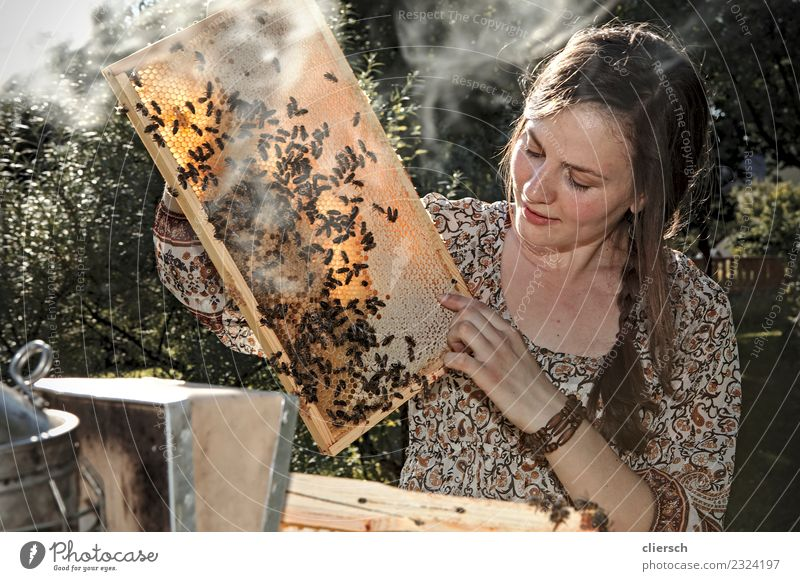 Female beekeeper working at her beehives Leisure and hobbies Work and employment Profession Bee-keeper Agriculture Forestry Human being Feminine Young woman