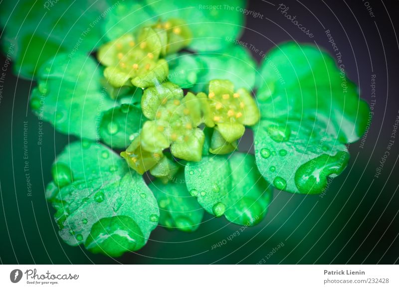 raindrops Environment Nature Plant Elements Drops of water Spring Blossom Foliage plant Wild plant Fresh Glittering Bright Beautiful Green Wet Growth
