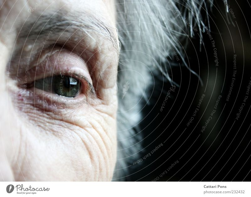 I never lost you in my heart! Human being Female senior Woman Skin Eyes 1 White-haired Short-haired Observe Think Dream Old Near Natural Gray Green Loneliness