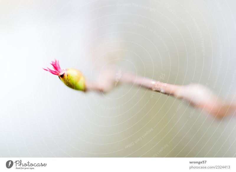 Nature Plant Green Winter Yellow Blossom Spring Small Gray Pink Park Bushes Near Bud Agricultural crop Diminutive