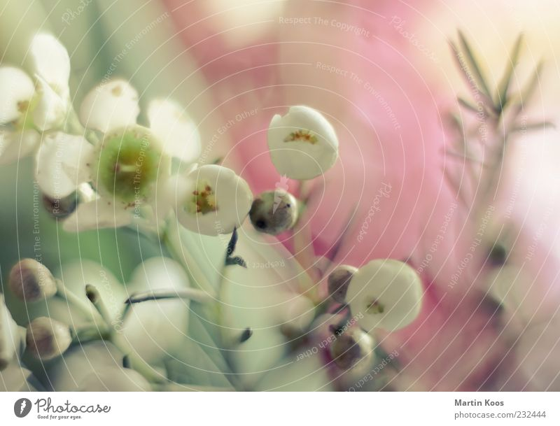 White Beautiful Plant Flower Colour Emotions Blossom Bright Beginning Esthetic Growth Illuminate Uniqueness Soft Delicate Fragrance