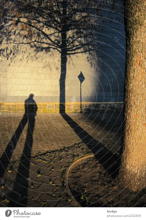 surrealism 1 Human being Wall (barrier) Wall (building) Stand Exceptional Fantastic Long Gold Warm-heartedness Surrealism Shadow Tree Sidewalk Light and shadow